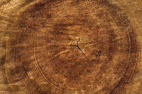 borové dřevo